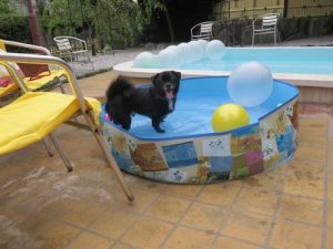 小型犬も安心プール